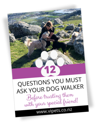 12 questions you must ask your dog walker before trusting them with your dog